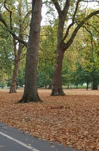 A beautiful autumnal picture of Hyde Park, taken by one of our Surveyors whilst cycling between appointments,