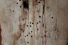 Holes in timber