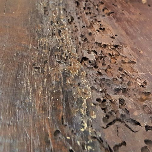 Woodworm damage